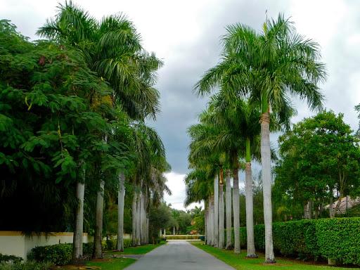 cây phong thủy cho resort