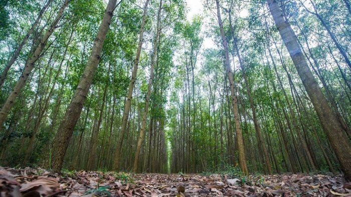 đất rừng sản xuất là gì