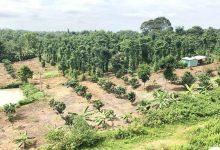 đất rừng sản xuất và những quy định pháp lý